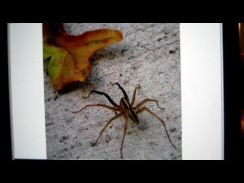 709 - Vlog 8/18/2014 - Saved a Spider