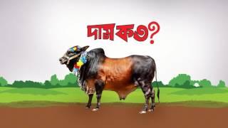 BRAVER presents Bhai Koto ?