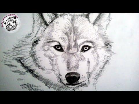 Como dibujar un lobo a lapiz paso a paso: Como dibujar animales con pelo
