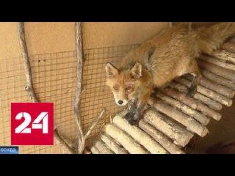 Теневая сторона рынка диких животных: кто и как спасает их от гибели?