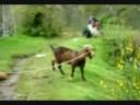 Youtube Thumbnail Bob Ed Goats Help