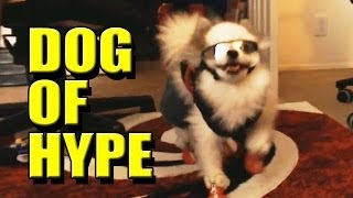 BENNY: The Dog Of Hype