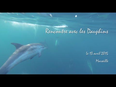 Les Dauphins arrivent à Marseille !