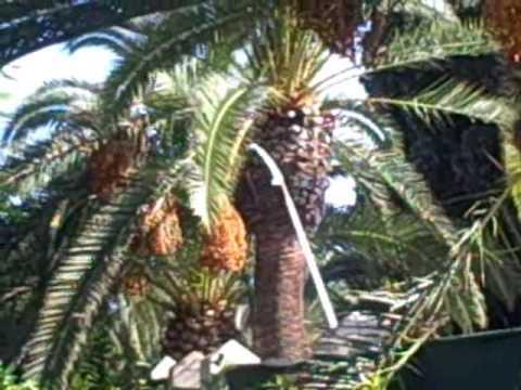 Pflanze palme
