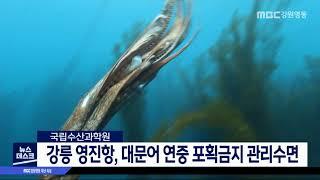 투/강릉 영진항, 대문어 연중 포획금지 관리수면 지정