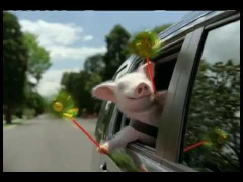Geico Pig Commercial (remix) video