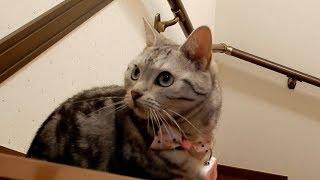 驚愕!母ちゃんと猫で競ってみたら…やっぱり猫のが賢かった?! -Pedometer For Cats and My Cat