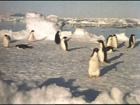 Archival Film: Lindblad Antarctic Expedition