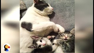 BEST Cat Dad Helps Feral Kitten Get Adopted | The Dodo