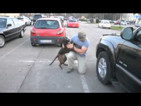 Dog Welcomes Home Soldier...Again