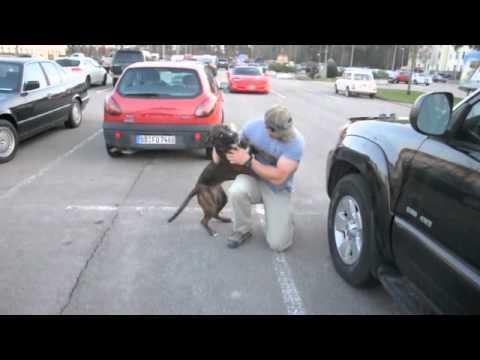 Perros - La mejor bienvenida que pueden darte