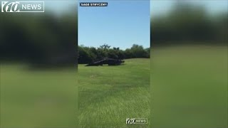 Massive gator 'Chubbs' spotted again in Florida