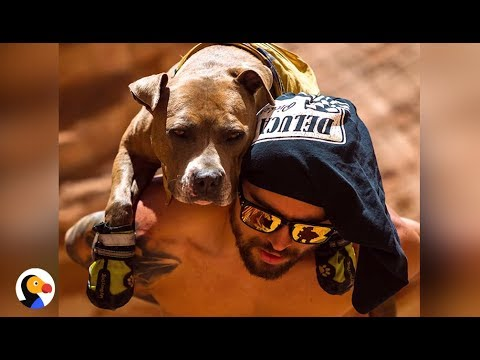 Pit Bull With SAD Past Goes On EPIC Hikes Now | The Dodo