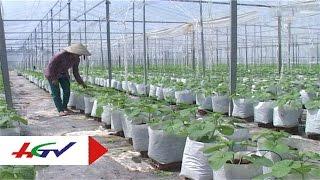 Mô hình trồng dưa lưới trong nhà kính | HGTV