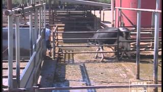 Dairy Safety (Spanish) Part 2