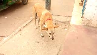 Dog video    How dog eat    street  dog      Pet and Animals