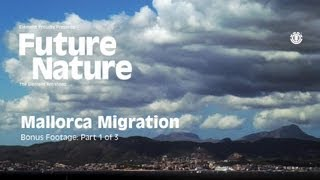 "FUTURE NATURE ""MALLORCA MIGRATION"" Part 1 of 3"