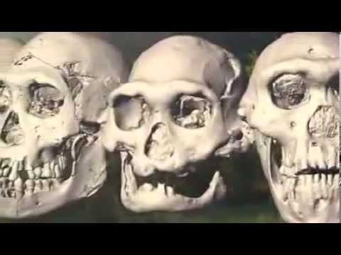 Skull Of Homo Erectus Throws Story Of Human Evolution Into Disarray video