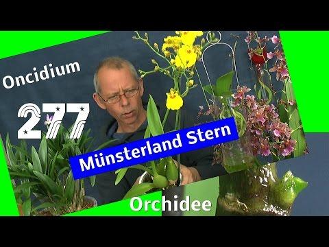 Die Welt der Orchideen entdecken