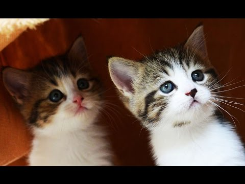 The Best Cute Kittens and Funny Cats Videos