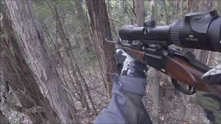 Fallow Deer Hunt with Blaser K95 and BBF95 Victoria 06/04/2018