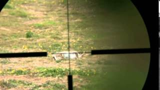 Rabbit Shooting 2 With A 17 Hmr Rifle