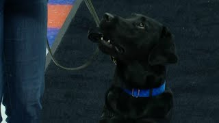 Gotta See It: Really cute dog Charlie drops puck at Islanders game