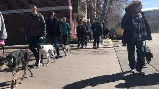 Traing the Trainers Seminar | T3 Walk | Solid K9 Training Dog Training