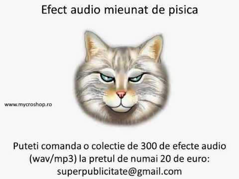 Efect Audio Mieunat De Pisica. Cat Sound Effects. video