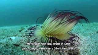 TOKINA AT-X 107 DX Fisheye 10-17mm