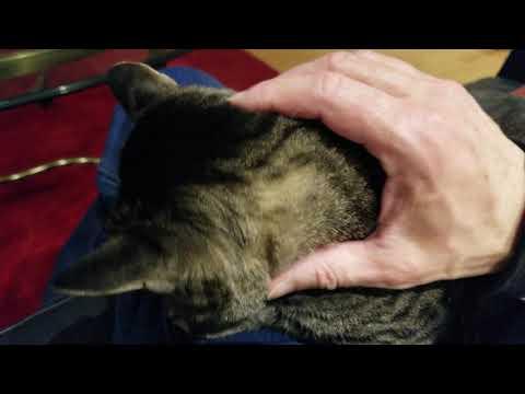 Feline Observational  -Tacy Cat Petting