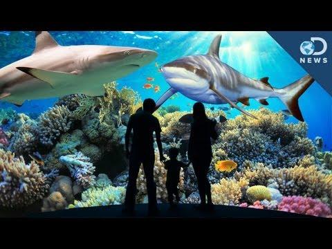 National Aquarium, Baltimore - fun things to do in ...