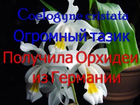 ШОК!!!!Новые орхидеи из Германии.Marei Karge Orchideengarten .