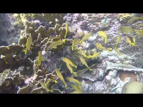 Snorkeling Caracas Bay