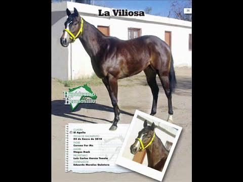 Potrillada 2012 Hipodromo De Hermosillo