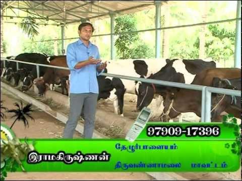 Dairy farm in tamil nadu(india)-BDF