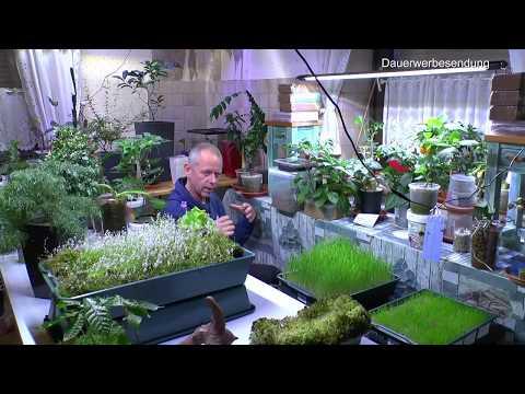Pflanzen aufräumen umräumen. Neues Licht Kurzversion 8000 Test