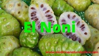 EL NONI - PROPIEDADES Y BENEFICIOS - LAS PLANTAS CURATIVAS