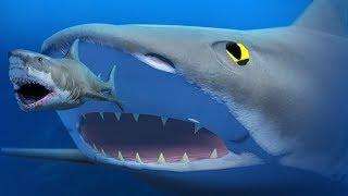 Download Lagu GIANT BLACK TIP SHARK! - Feed and Grow Fish - Part 78 | Pungence Gratis STAFABAND