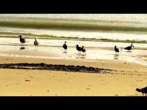 Tracy Chapman - Bridges