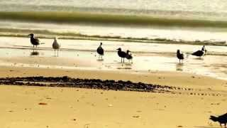 Watch Tracy Chapman Bridges video