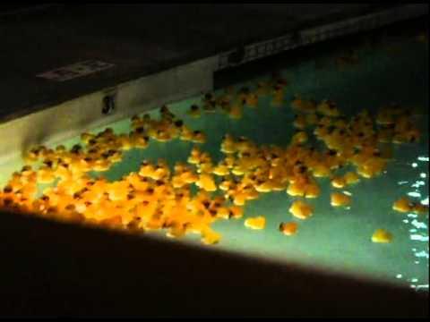 $1M. duck race 2010