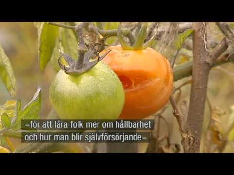 Gardening Allotment, climate and environment