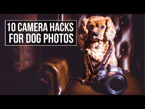 10 CAMERA HACKS for DOG PHOTOGRAPHY