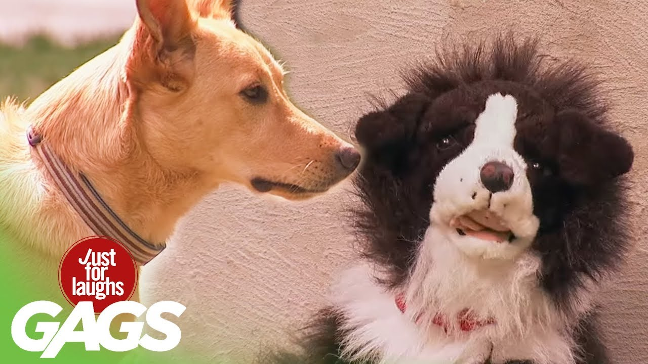 Dog Stuffed Animals That Look Real Stuffed Dog Attacks Real Dog