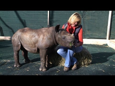South African orphanage opens for baby rhinos
