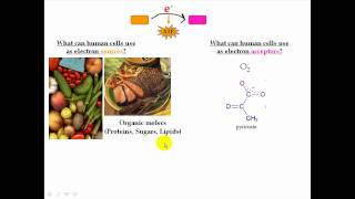 Prokaryotic Metabolism Warmup Info Part 2
