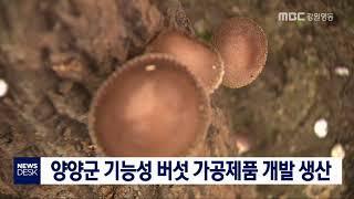 투/양양군 버섯 가공제품 개발  생산