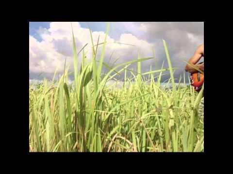 Sa Kampo Ni Ladio Music Video Group 11 Novellino video