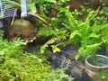 Dart frog Breeder Tanks